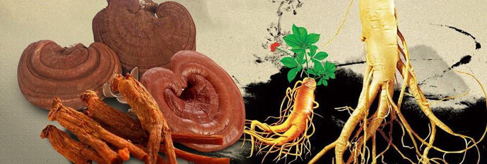 Nấm linh chi và đông trùng hạ thảo hỗ trợ rất tốt trong điều trị bệnh