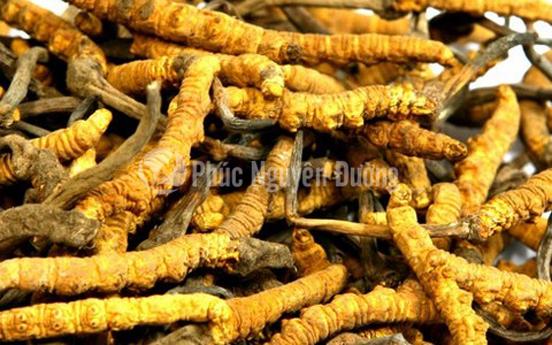 Đông trùng hạ thảo loại sấy khô