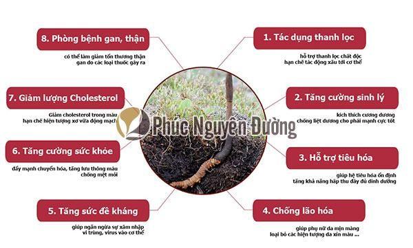 Đông trùng hạ thảo có công dụng vô cùng đa dạng và hữu ích