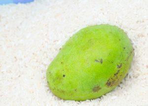 Bỏ trái cây vào thùng gạo hoặc trong túi ni lông đựng đầy gạo thì trái cây sẽ chín nhanh hơn