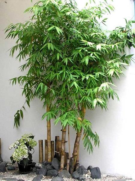 Nhà ở nên trồng những loại cây nào?